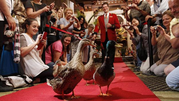 Paseador de patos trabajos más raros del mundo