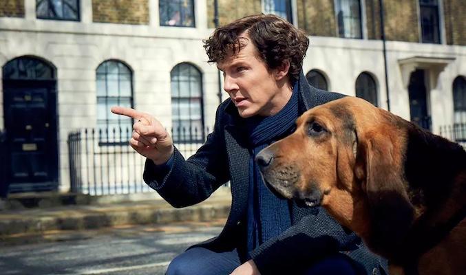 Benedict Cumberbatch, Holmes, perro