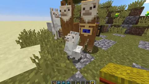 Cómo Domar Y Montar Una Llama En Minecraft Hobbyconsolas