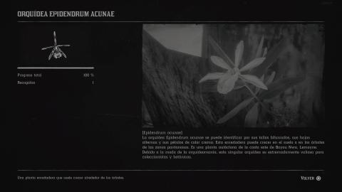 Orquideas Red Dead Redemption 2