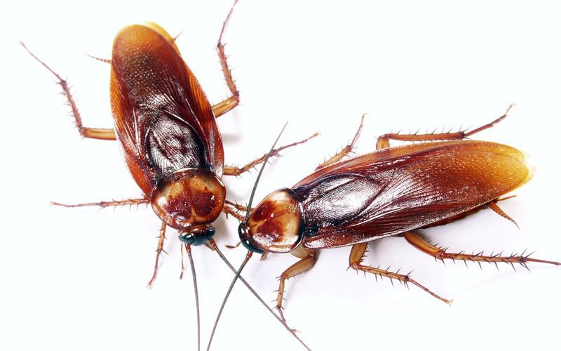 Cucarachas en PS4